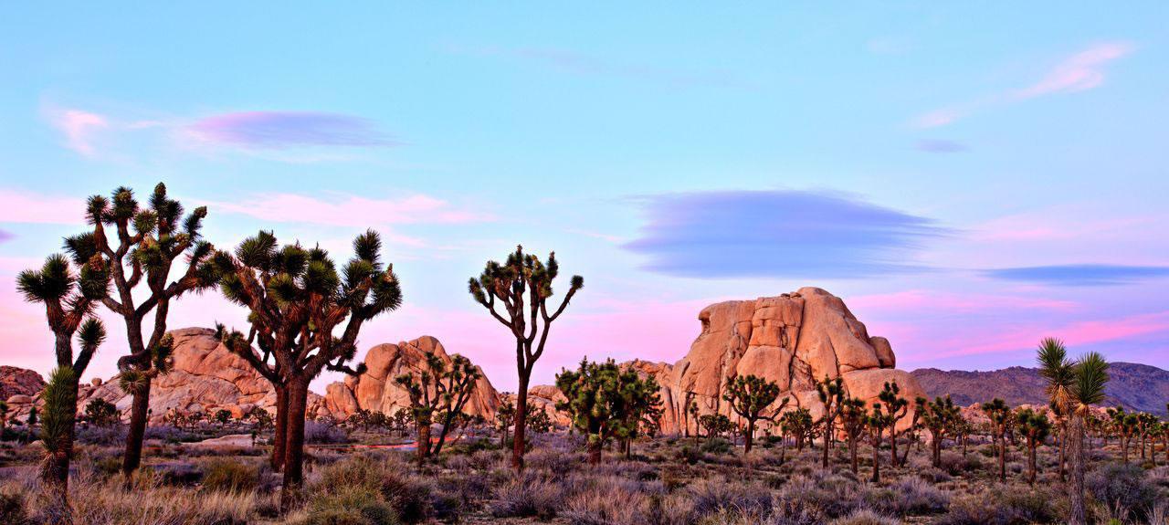 Dritti verso il deserto: Joshua Tree