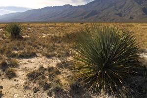 Dall'Arizona al New Mexico: Winslow, Gallup e Albuquerque.